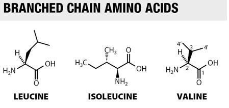 waar kan ik aminozuren kopen